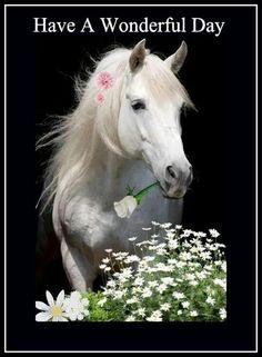 lovas névnapi köszöntő névnapi képek, képeslapok, gyönyörű lovas kép | üzenetek | Pinterest lovas névnapi köszöntő