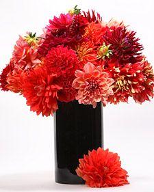 Floral designer Oscar Mora shows Martha how to make a stunning dahlia arrangement.