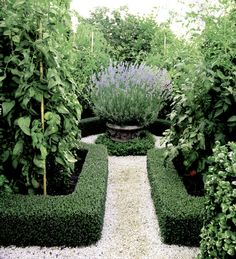 I am in the process of designing a parterre for our front yard. It is the perfect solution to replace our lawn. Outdoor, Beautiful Gardens, Formal Gardens, Hedges, Gorgeous Gardens, Outdoor Gardens, Garden Design, Garden Landscaping, Parterre