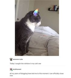 Read 18 (not a chapter sorry) from the story LGBTQ+ Memes by And_Veggie (aNdVEgGiE) with 904 reads. Funny Animal Memes, Cute Funny Animals, Cute Baby Animals, Cat Memes, Funny Cute, Cute Cats, Funny Memes, Hilarious, I Love Cats