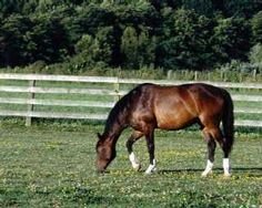 Pasture Management for Horses~Lots of great articles on horse care at this site! :)