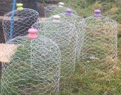 Chicken Wire Cloches is part of Plant cages - Fenced Vegetable Garden, Raised Vegetable Gardens, Allotment Gardening, Vegetable Garden Design, Gardening Tips, Allotment Design, Chicken Wire Fence, Chicken Garden, Garden Crafts