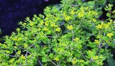 Horticulture, Herbs, Garden, Plants, Inspiration, Biblical Inspiration, Lawn And Garden, Herb, Gardens