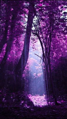 Looks like a purple paradise!