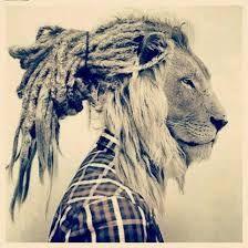 lion dread rasta lion my style hippy style rastafari the o jays love . Rasta Tattoo, Lion Tattoo, Dreads, Reggae Mix, Gravure Laser, Rasta Lion, Black Lion, Animal Magic, Mountain Lion