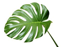 how to make paper tropical leaves | tropical leaves these leaves would look stunning in tropical ...