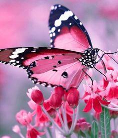 Butterfly Painting, Butterfly Wallpaper, Butterfly Flowers, Butterfly Photos, Butterfly Kisses, Butterfly Wings, Beautiful Bugs, Beautiful Butterflies, Beautiful Flowers