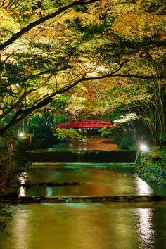 https://flic.kr/p/qhfZuL | Red bridge | Ogunijinja Shrine 小國神社 紅葉ライトアップ 気分は小京都の一枚。Mori-machi, Shizuoka pref, Japan