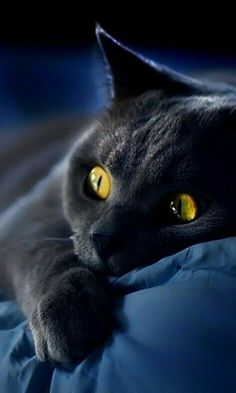 Black Cat elegance and  sophistication