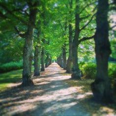 malmin hautausmaa - Google-haku Malm, My Heritage, Finland, Country Roads, Google, Plants, Plant, Planets