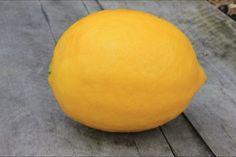 Lemon Pickle - POD easy edible gardening