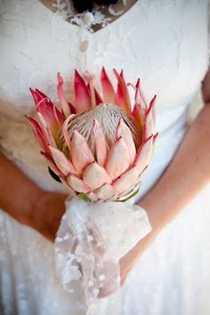 I've seen these flowers being used as the wedding bouquet.... Just a simple flower with a ribbon on it.