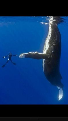 Scuba dive with whales.!