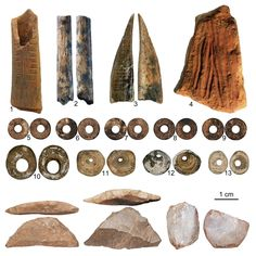 Worked artefacts from Panga ya Saidi cave (from left to right): worked red ochre; bead made of a sea shell; close-up of the bone tool showing traces of scraping. © Francesco D'Errico and Africa Pitarch Modern Coast, Bone Arrow, Native American Tools, Archaeology News, Indian Artifacts, Iron Age, East Africa, Modern Man, How To Make Beads
