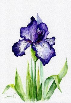Original watercolor painting by artist Svetlana Smirnova at ETSY: www. - artist - Original watercolor painting by the artist Svetlana Smirnova at ETSY: www. Iris Painting, Painting & Drawing, Watercolor Paintings, Flower Paintings, Art Painting Flowers, Watercolour Drawings, Purple Painting, Watercolours, Body Painting