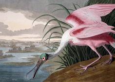 A Naturalist & an Artist ...