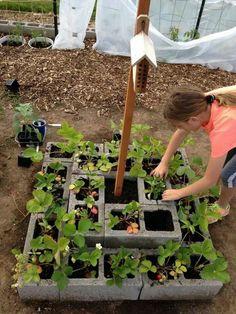 Nice 63 Brilliant Diy Cinder Block Garden Design Ideas.  #DiyCinderBlockGardenDesign