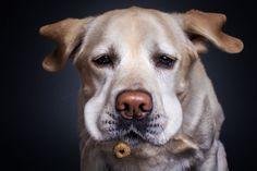 Fotógrafo Capturou As Divertidas Expressões De Cães Famintos Pegando Biscoitos No Ar