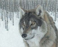 Wolf in Aspens Fine Art Print