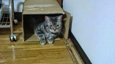 Pets Patinhas: Adoro caixa. Quando encontrouma caixa é a maior d...