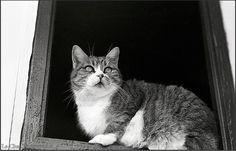 Les 30+ meilleures images de les chats à la fenêtre | felin, chat, refuge