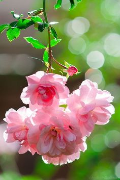 pink & green - the colors of spring