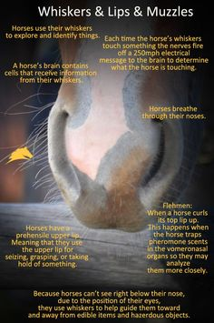 Who doesn't love an adorable, squishy, soft, horse nose?