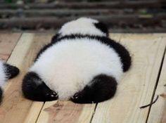 The Animals, Fluffy Animals, Cute Little Animals, Cute Funny Animals, Cute Dogs, Cute Babies, Wild Animals, Pandas Baby, Cute Panda Baby