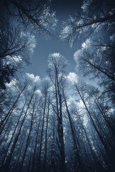TreetopsByJoni N| Website| Facebook