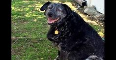 Senior Dog Who Waited Months for His Deceased Owner to Come Back: The Ballad of Ricky Bobby