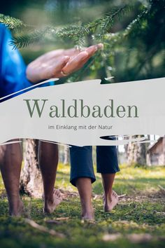 """""""Bäume sind Heiligtümer. Wer mit ihnen zu sprechen, wer ihnen zuzuhören weiß, der erfährt die Wahrheit. Sie predigen nicht Lehren und Rezepte, sie predigen, um das einzelne unbekümmert, das Urgesetz des Lebens.""""      Hermann Hesse Stress, Hermann Hesse, Blog, Tourism, Bathing, Nature, Health, Blogging"""