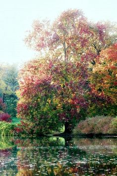 Monet ~Tree by Water
