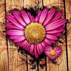 Cute flower heart