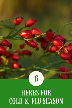 6 Herbs for Cold and Flu Season