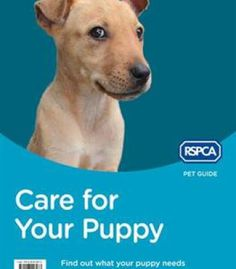 Care For Your Puppy (Rspca Pet Guide) PDF