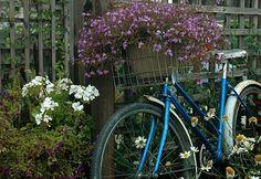 Old blue bike