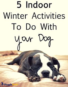 Pet Health 5 Indoor Activities To Do With Your Dog - M M The Pitty Stuck inside from the bitter cold? Even your dog gets stir crazy. Here's some things to cure the winter blues. I Love Dogs, Puppy Love, Cute Dogs, Dog Training, Training Tips, Training Classes, Rambo, Indoor Activities, Winter Activities