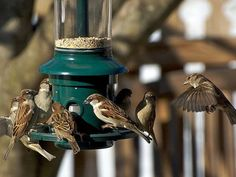 Stop Bully Birds at Backyard Feeders Are some birds bullies at your feeders? Stop bully birds so bird feeders are for small birds only and unwelcome species will stay away. Small Bird Feeder, Diy Bird Feeder, Wild Bird Food, Wild Birds, Big Bird, Small Birds, Oriole Bird Feeders, Bird House Kits, Bird Aviary