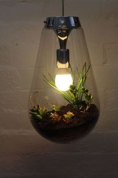 Miniscapes Terrarium Light