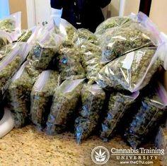 Cannabis Training University's photo.