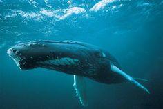 fundo do mar baleia - Pesquisa Google