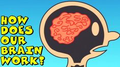 How Does Our Brain Work?