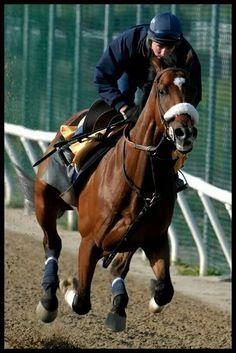 Kentucky Derby Winner 2006 Barbaro