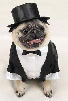 Dog tuxedo and top hat | #TreatYoSelf #ParksandRec