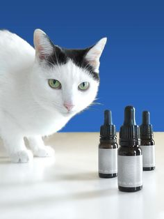 When your pet gets sick, we are looking to find them the best possible medicine or treatment available. CBD can also help your pets to find a dynamic equilibrium. Your Pet, Sick, Medicine, Pure Products, Pets, Animals, Animales, Animaux, Medical
