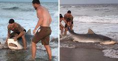 Vídeo: Hombre quita anzuelo a tiburón y lo devuelve al mar - http://www.infouno.cl/video-hombre-quita-anzuelo-a-tiburon-y-lo-devuelve-al-mar/