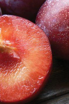 Plum 'Santa Rosa'. Self-pollinating tree that has very sweet fruit