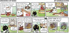 Breaking Cat News by Georgia Dunn for Aug 20, 2017 | Read Comic Strips at GoComics.com
