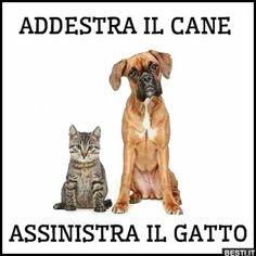 Addestra il cane Love Pet, I Love Cats, Memes Humor, Funny Video Memes, Funny Jokes, Animals And Pets, Cute Animals, Italian Memes, Hachiko