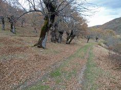 Camino en el monte de Urrez.